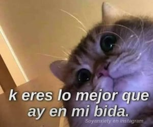 amor, Gatos, and frases image