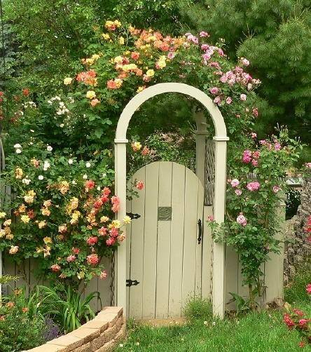 rose and garden image