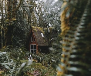 cabin, nature, and architecture image