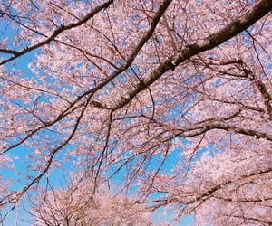 aesthetic, cherry blossom, and pastel image