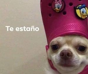 amor, graciosos, and teextraño image