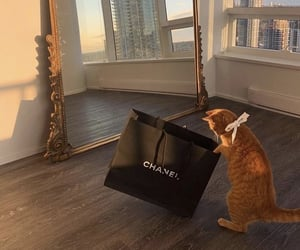 cat, chanel, and fashion image