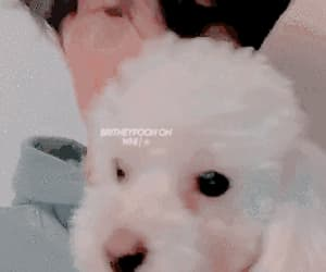 boys, gif, and puppy image