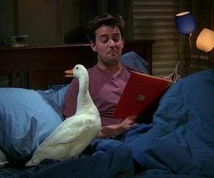 chandler, sitcom, and duck image