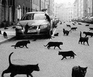 black cats image