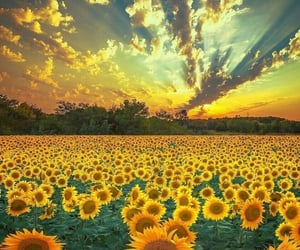 nature, sunflower, and landscape image