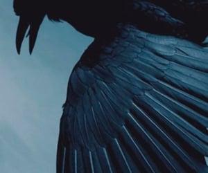hogwarts, ravenclaw, and hufflepuff image