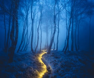 blue, forest, and woods image