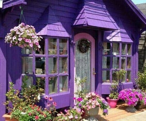 purple, flowers, and home image