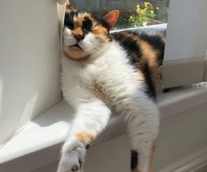 cat and pretty image
