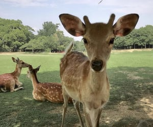 animal, deer, and nature image
