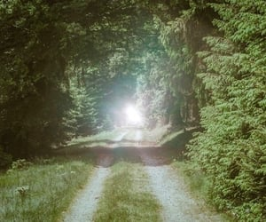 green, light, and nature image