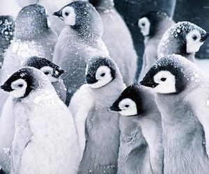 adorable, wildlife, and bird image