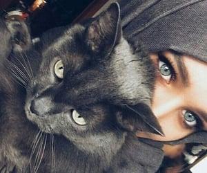 eyes, cat, and hijab image