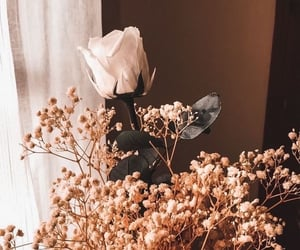 flowers, photography, and wallpaper image