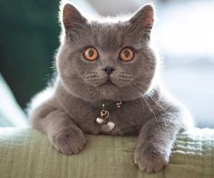 fluffy, pet portrait, and cute pets image