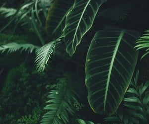 green, aesthetic, and nature image