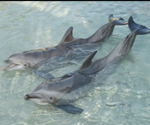dolphin, water, and animal image