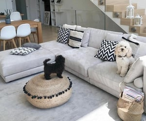 apartment, dogs, and interior image