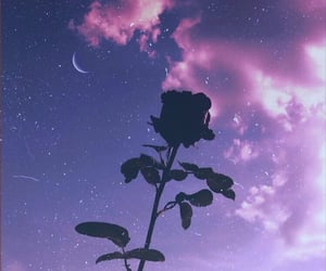 rose, clouds, and flowers image