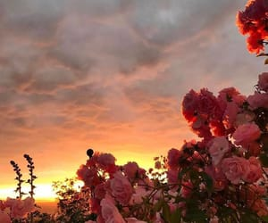 flowers, sunset, and sky image