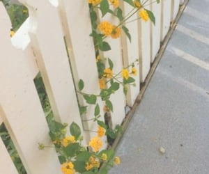 aesthetic, fence, and flowers image