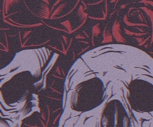 rose, skull, and wallpaper image
