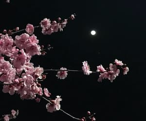 night, dark, and flowers image