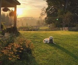 calmness, dog, and life image