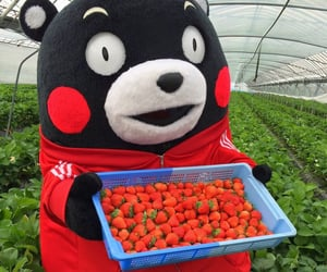 japan, strawberries, and strawberry image