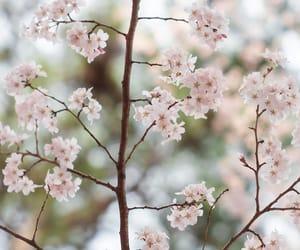 flower, sakura, and spring image