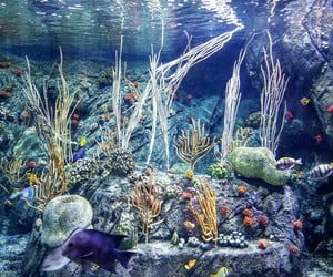 aquarium, aquatic, and coral image