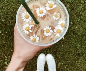 coffee, daisy, and drinks image