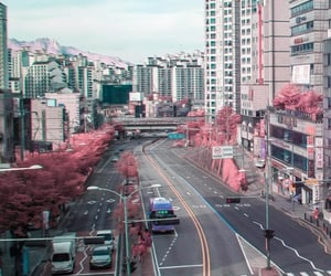 beauty, flower, and seoul image