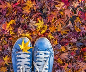 autumn, blue, and convers image