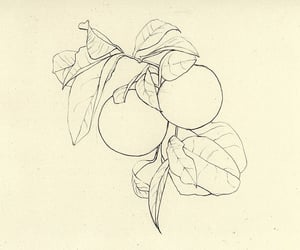 beige, fruit, and line image