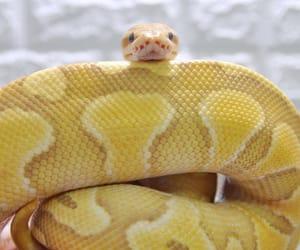 python, reptile, and snake image