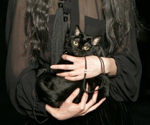 black, hands, and black cat image