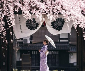 cherry blossoms, japan, and kimono image