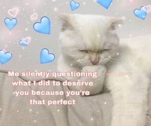 cat, memes, and soft image