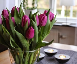 beauty, flowers, and home image