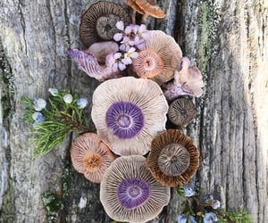 nature and purple image