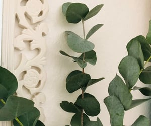 eucalyptus, flowers, and green image
