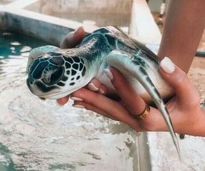 animal, animals, and marine image