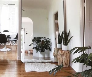 decor, home, and plants image