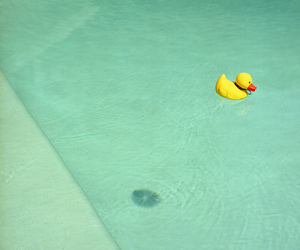 rubber duck, water, and cute image