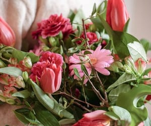 bloom, flowers, and tulips image