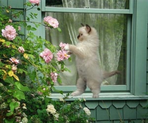 flowers, window, and garden image
