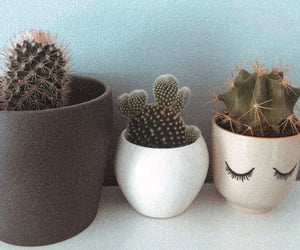 cactus, chill, and cocooning image