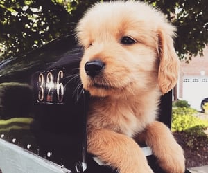 adorable, dog puppy, and dog nose image
